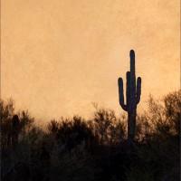 Midnight Naranga, Saguaro – Mesa AZ, 2012