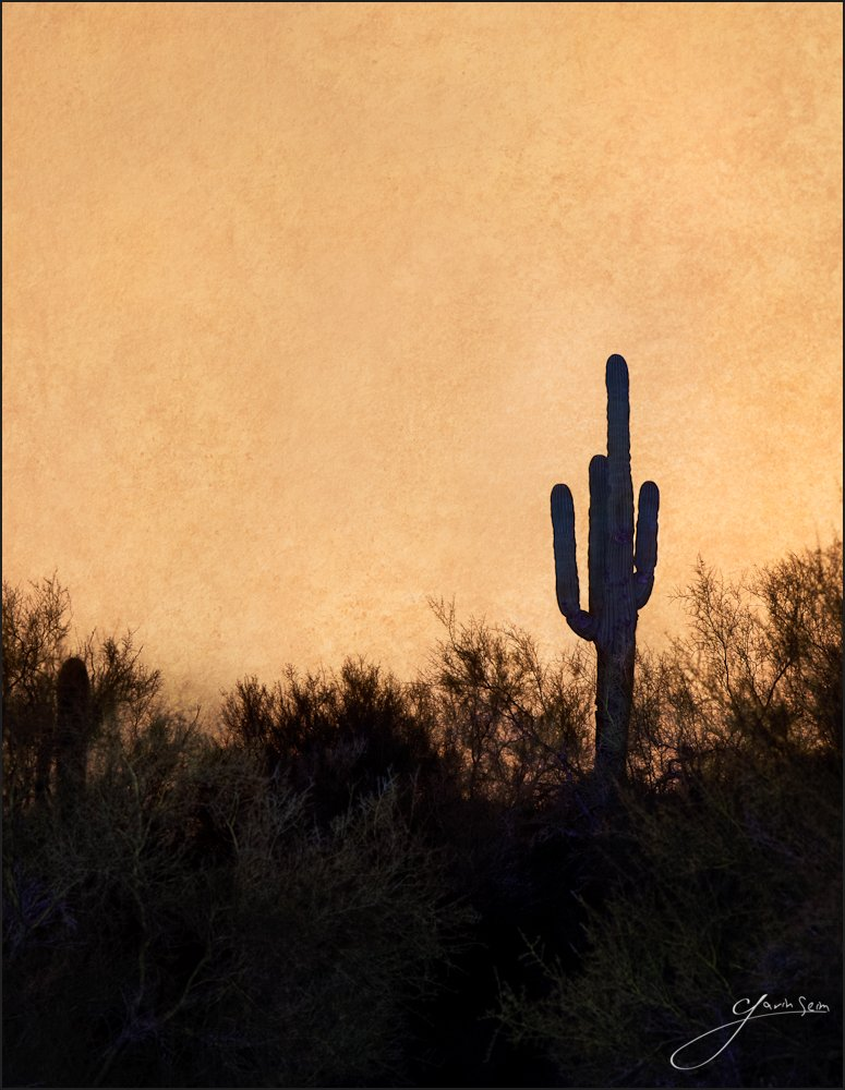 Midnight Naranga, Saguaro – Mesa Arizona2