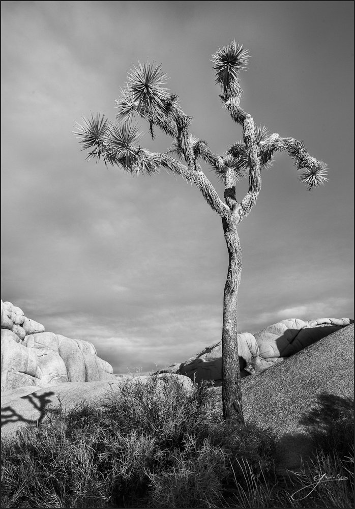 The Skinny Kid Joshua Tree National Park The Skinny Kid   Joshua Tree NP
