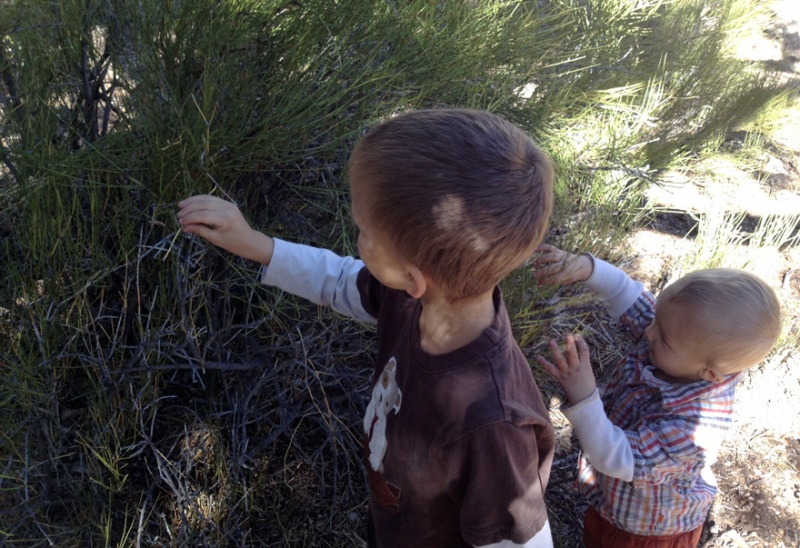 We found wild Ephedra Viridis which makes a great tea. The kids were having a blast.